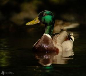 david_veprek-animals-11