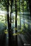 david_veprek-landscape-38